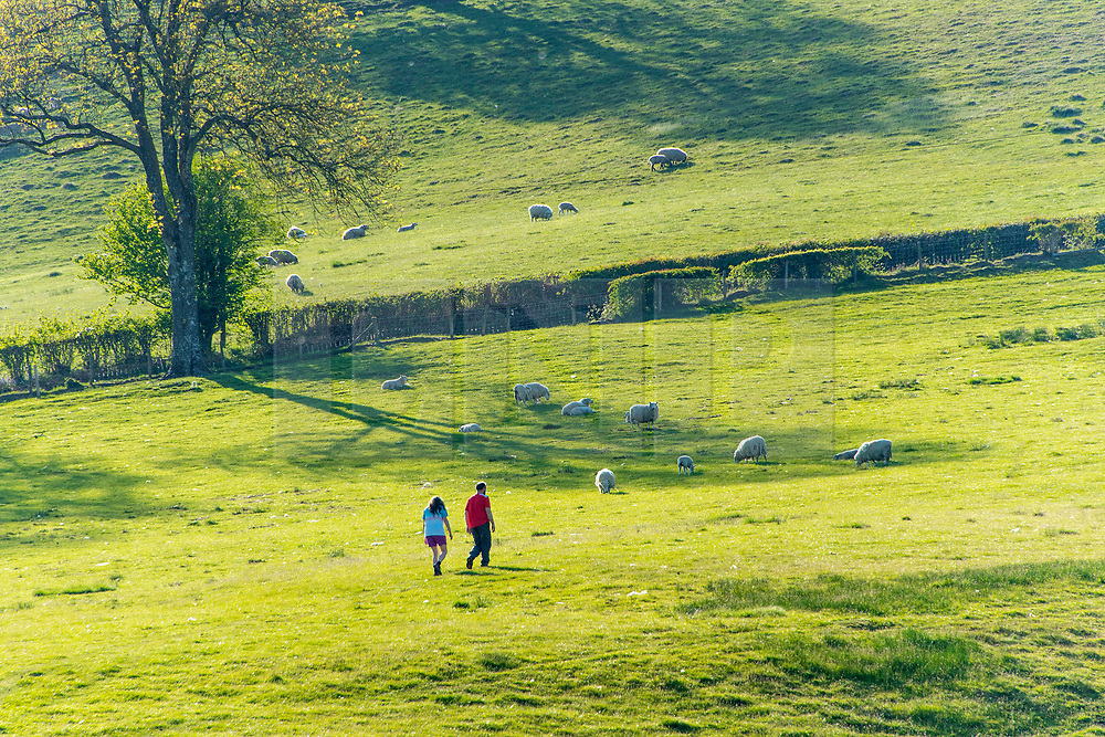 © Licensed to London News Pictures. 19/05/2020. Llandrindod Wells, Powys, Wales, UK. A man and woman walk through a pastoral landscape on a beautiful warm sunny evening near Llandrindod Wells in Powys, Wales, UK.<br /> Photo credit: Graham M. Lawrence/LNP