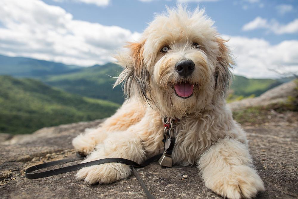 Fluffy smiling dog on mountain summit