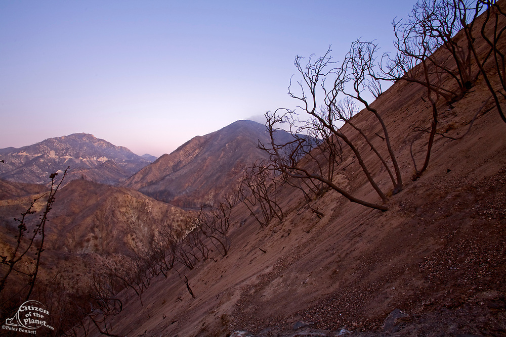Scorched earth and burnt trees along Big Tujunga Canyon road from Station fire in September, 2009. San Gabriel Mountains, Angeles National Forest, Los Angeles, California ,USA