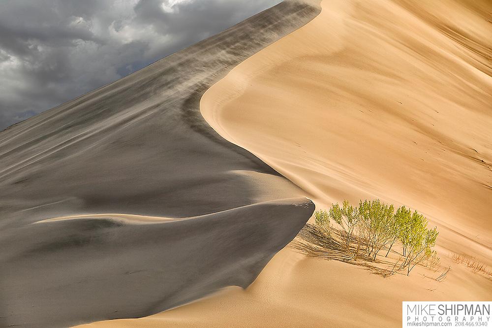 Bruneau Dunes State Park, Idaho, Owyhee County