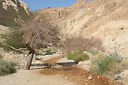 Israel, Judean Desert, Wadi Bokek