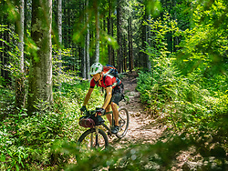 Mountain biker riding amidst woods of Black forest, Hinterzarten, Baden-Wuerttemberg, Germany
