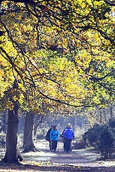 © Licensed to London News Pictures. 13/11/2013. Burnham, UK Peiople enjoy walking through the woodland. Autumn sunshine through the trees at Burnham Beeches, South Buckinghamshire on WEDNESDAY 13TH NOVEMBER. The beeches covering 220 hectares is primarily noted for its ancient beech and oak pollards. Photo credit : Stephen Simpson/LNP