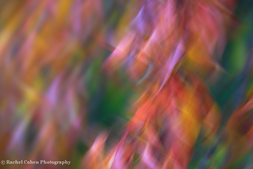 """""""Pirouette""""<br /> <br /> Colorful swirling leaves in abstract."""