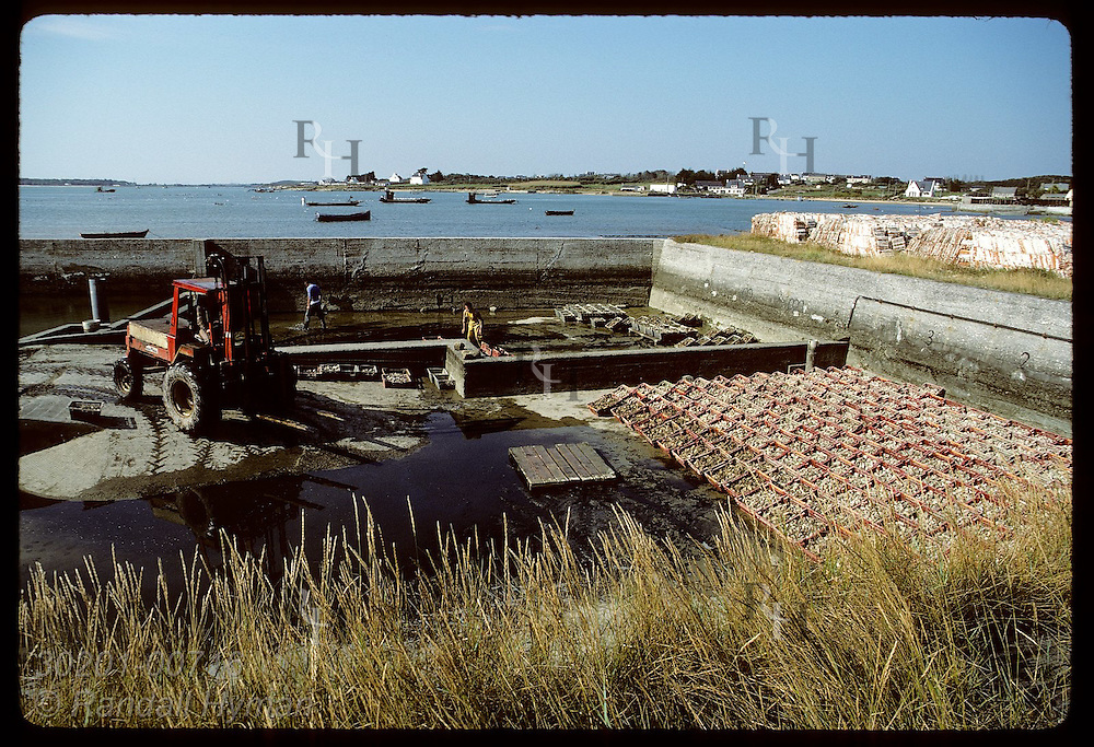 Purification basin at Quiberon Bay will be filled with water to let oysters purge themselves. France