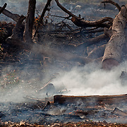 Burning a cocoa plantation in order to grow African palm oil. Villa Comaltitlán, Mexico.