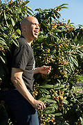 Democratic presidential hopeful Senator Cory Booker harvests Loquat fruit from a tree at Fresh Future Farm April 27, 2019 in North Charleston, South Carolina. Booker spent his 50th birthday helping out at the urban farm as part of his Justice For All tour.