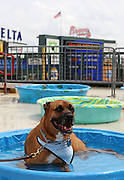 """ATLANTA - AUGUST 29:  Sampson sits in a pool in the upper deck of Turner Field during the """"Bark in the Park"""" event before the game between the Atlanta Braves and the Florida Marlins on August 29, 2010 in Atlanta, Georgia.  (Photo by Mike Zarrilli/Getty Images)"""