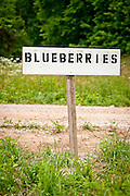 A hand made blueberry sign at the entrance to a farm in Arkansas.