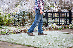 Walking on a frosted lawn can cause damage