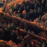 Brilliant autumn colors paint the mountain sides and the trees  in Great Smoky Mountains National Park, NC.