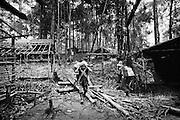 Brazil, Amazonas, Eldorado do Juma.<br /> <br /> Grota rica, curutela (camp de base).<br /> Eldorado do Juma est maintenant un bidonville de plastique noir et de misere croissante sur la rive du fleuve, qui attire les prospecteurs. Des centaines d'hommes y creusent la boue sur leurs petites parcelles delimitees par des branchages et des ficelles. A la fin du jour, les plus chanceux auront trouve quelques poussieres d'or, vendues ensuite 40 reals le gramme (14,5 euros) a Apui, 65km au nord. Les plus riches du coin sont ceux et celles qui cuisinent, nettoient ou divertissent les mineurs.<br /> Il y a trop de prospecteurs pour la teneur du filon, du coup les garimpeiros s'eparpillent sur une surface qui couvre plus de 40 hectares. Tous les mineurs dependent de l'autorisation d'une cooperative de proprietaires pour travailler. Ces proprietaires ne possedent pourtant pas de titre foncier pour justifier leur etat, ils sont simplement arriver les premiers sur les parcelles : c'est la loi de l'or.<br /> Quatre mois apres le debut de cette ruee, la plupart du minerai qui peut etre extrait manuellement a ete trouve, les mineurs qui restent sont les survivants de la rumeur. Ils n'ont souvent plus rien et esperent seulement trouver de quoi payer le voyage pour aller tenter leur chance vers d'autres terres promises.