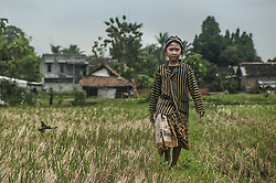 September 17, 2016 - Yogyakarta, YOGYAKARTA, Indonesia - A child walk in the field during event Studio Natural Child, Yogyakarta, Indonesia, on September 17, 2016. This event to provide education to the children about the traditional game, local culture and give children space to express themselves with art. (Credit Image: © Pradita Utama/NurPhoto via ZUMA Press)