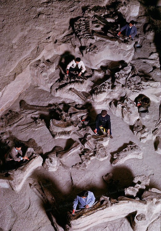 The middle Jurassic was pretty much a black hole in dinosaur research until the mid-1970's, when a road crew cutting a swatch for a new hiway outside Zigong discovered a virtual cemetery of them.