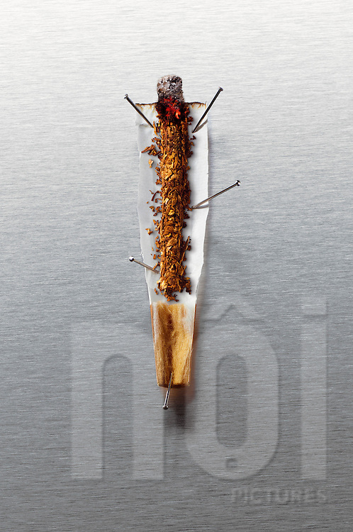 Anatomy of burning cigarette. The burning cigarrette was sliced open and pinned by small nails revealing its inner workings.