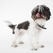 Dog photographed while waiting for adoption.  Pet photography by Michael Kloth.