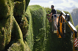 © London News Pictures. Welshpool, Wales, UK. 03/09/20014.  DAVID SWANTON, Head Gardener at the medieval National Trust property, Powis Castle, on the outskirts of Welshpool, mid wales, at work on the annual task of trimming the huge 300 year old, 14 meter high, giant yew topiary which overlooks the countryside of the Welsh and English border.  The job which used to take months for a team of workers on tall heavy ladders  is now completed in a matter of weeks done from the basket of a cherry picker. Photo credit: Keith Morris/LNP