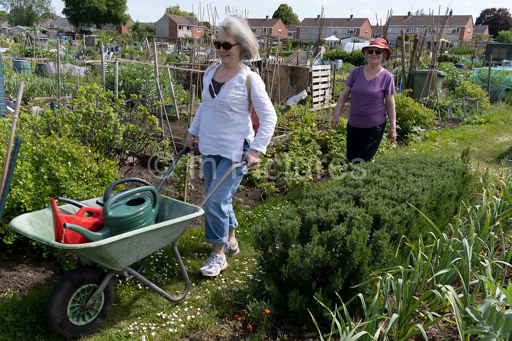 A younger woman pushes full watering cans in front of her elderly mother at the family vegetable allotment plot, on 30th May 2021, in Nailsea, North Somerset, England.