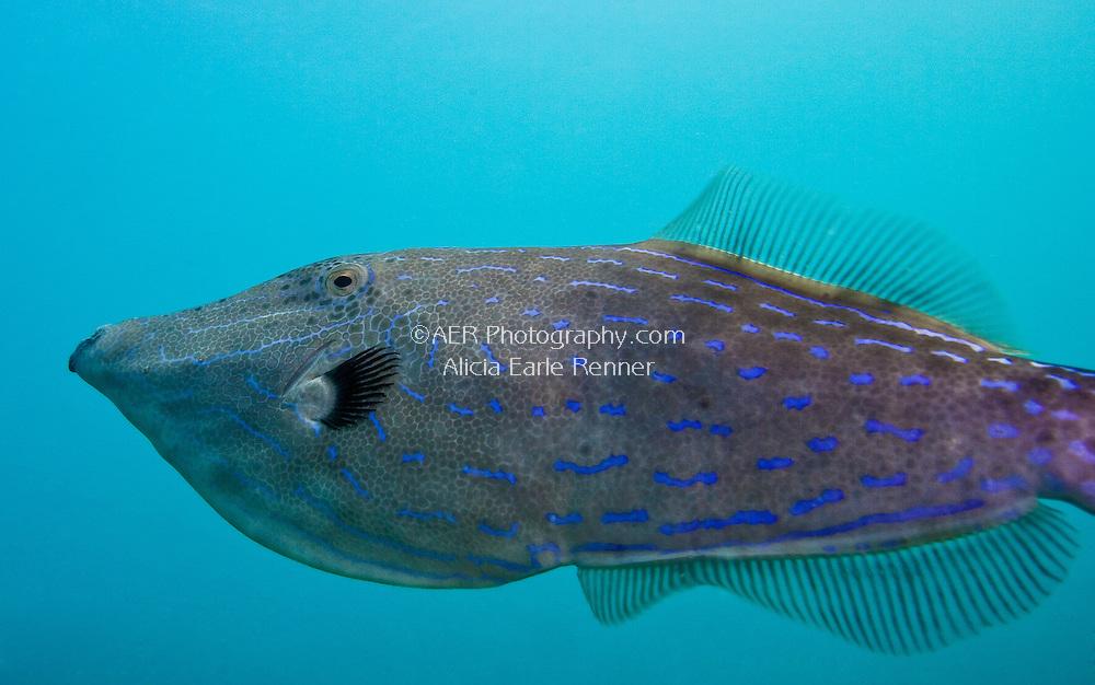 Florida Keys marine life file fish