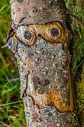Firewood log design, April, Clallam County, Olympic Peninsula, Washington, USA