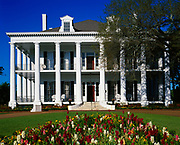 Dunleith, built in 1856 in Greek Revival Style with 26 Tuscan columns surrounding the house.  Now owned by Mrs. Edward Worley and her son, Michael, Natchez, Mississippi.