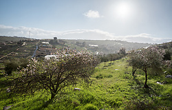 1 March 2020, Tuqu, Palestine: View of a valley in Tuqu.
