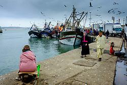 Landing a catch of fresh fish at the harbour in Essaouira, Morocco<br /> <br /> (c) Andrew Wilson | Edinburgh Elite media