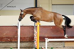 Berdina<br /> KWPN Paardendagen 2009<br /> © Hippo Foto - Leanjo de Koster
