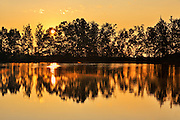 Tree reflected in pond at sunrise<br /> L'Isle-aux-Coudres<br /> Quebec<br /> Canada