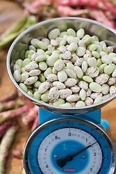 Borlotti beans on scales