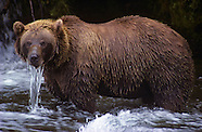 FEATURE: The Wild Within - Alaskan Brown Bears