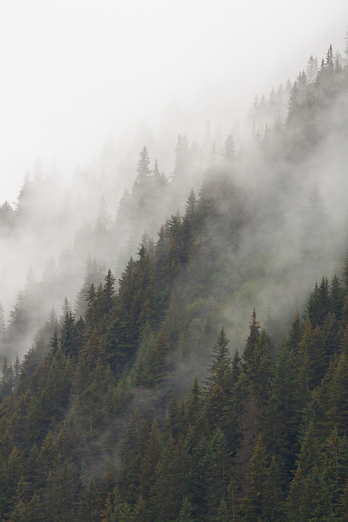 Distant view of a misty forest on the side of a mountain in Seward, Alaska