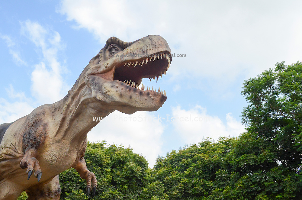 Tyrannosaurus rex is arguably the most famous dinosaur of all. It lived during the last 5 million years of the Cretaceous period, 70-65 million years ago, in what is now North America. An active hunter and possibly also an opportunistic scavenger, Tyrannosaurus measured about 14 metres long, 5-6 metres tall, and weighed about 7 tons.