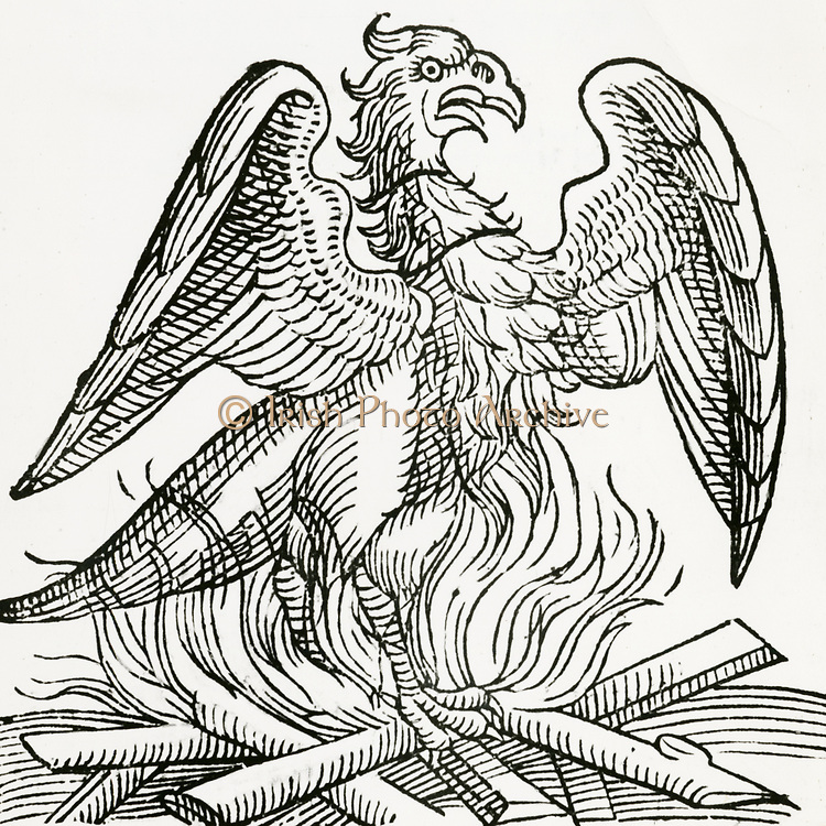 'The Phoenix, a fabulous bird which at the end of life makes a nest which it sets on fire, burns itself to ashes, then comes to life again. From ''Prodigiorum ac ostentorum'' , 1557, by Conrad Lycosthenes.'