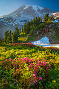 Wildflower meadow at Paradise, Mount Rainier, Washington, USA<br /> .....<br /> Mount Rainier National Park is a United States National Park located in southeast Pierce County and northeast Lewis County in Washington state. It was established on March 2, 1899 as the fifth national park in the United States. The park encompasses 236,381 acres including all of Mount Rainier, a 14,411-foot stratovolcano. The mountain rises abruptly from the surrounding land with elevations in the park ranging from 1,600 feet to over 14,000 feet. The highest point in the Cascade Range, around it are valleys, waterfalls, subalpine meadows, old-growth forest and more than 25 glaciers. The volcano is often shrouded in clouds that dump enormous amounts of rain and snow on the peak every year and hide it from the crowds that head to the park on weekends.<br /> <br /> Mount Rainier is circled by the Wonderland Trail and is covered by several glaciers and snowfields totaling some 35 square miles. Carbon Glacier is the largest glacier by volume in the contiguous United States, while Emmons Glacier is the largest glacier by area. About 1.8 million people visit Mount Rainier National Park each year. Mount Rainier is a popular peak for mountaineering with some 10,000 attempts per year with approximately 50% making it to the summit.