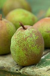 Pear - Pyrus communis 'Merton Pride'
