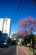 Belo Horizonte_MG, Brasil.<br /> <br /> Imagens do programa PREMIAR da CEMIG,Companhia Energetica de Minas Gerais. O Premiar e o programa que define as politicas e acoes da Cemig voltadas para o manejo da arborizacao urbana, com foco na reducao dos conflitos entre arvores e a rede eletrica.<br /> <br /> Rewarding program of Cemig, Companhia Energetica de Minas Gerais. The Reward and the program that defines the policies and actions of Cemig focused on the management of urban trees, focusing on the reduction of conflicts between trees and power grid.<br /> <br /> Foto: JOAO MARCOS ROSA / NITRO