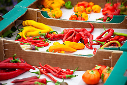 Mixed chilli peppers harvested into cardboard boxes
