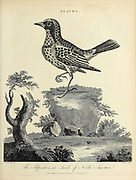Alauda is a genus of larks found across much of Europe, Asia and in the mountains of north Africa, Copperplate engraving From the Encyclopaedia Londinensis or, Universal dictionary of arts, sciences, and literature; Volume I;  Edited by Wilkes, John. Published in London in 1810