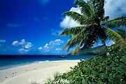 Sandy Cay, British Virgin Islands ( Caribbean Sea )