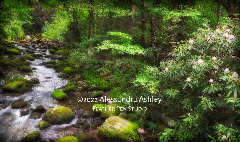 Soft light highlights woodland setting with white rhododendron blooming beside the Roaring Fork mountain stream.  Great Smoky Mountains National Park near Gatlinburg, TN.