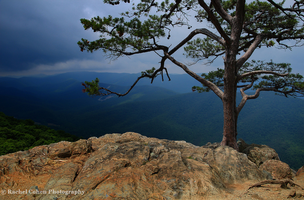 """""""Darkness on Ravens Roost""""<br /> <br /> A storm approaches Ravens Roost Overlook in the blue Ridge Mountains of Virginia! The lone pine tree stands as a sentinel on the rock formations!"""