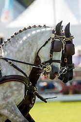 Mourier Sebastien, (FRA), Beretto, Bolygo, Divers, Omenage<br /> Dressage test<br /> FEI European Championships - Aachen 2015<br /> © Hippo Foto - Dirk Caremans<br /> 20/08/15