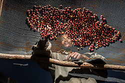 Mohammad Abafita, a farmer in the village of Doyo, in the region of Jimma, Ethiopia, sorts cherries that will be processed into coffee beans, December, 2012. Ethiopia is the world's seventh largest producer of coffee, and Africa's top producer.