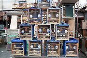 Birds for sale at a pet shop market in Shanghai, China.