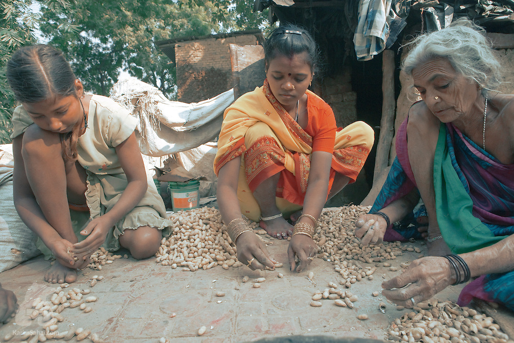 An elderly woman and her grand daughters sift through peanuts on a sidewalk, before selling them at a nearby market, Sarnath, Uttar Pradesh, India
