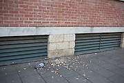 One pigeon gets all the bread in London, England, United Kingdom.