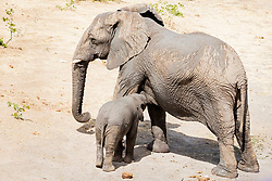 Elephant family at Etosha National Park, Namibia, Africa