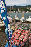 Inatori Fishing Port, Inatori, Izu . Fresh fish is an important form of food for the Japanese, who consume it nearly every day.