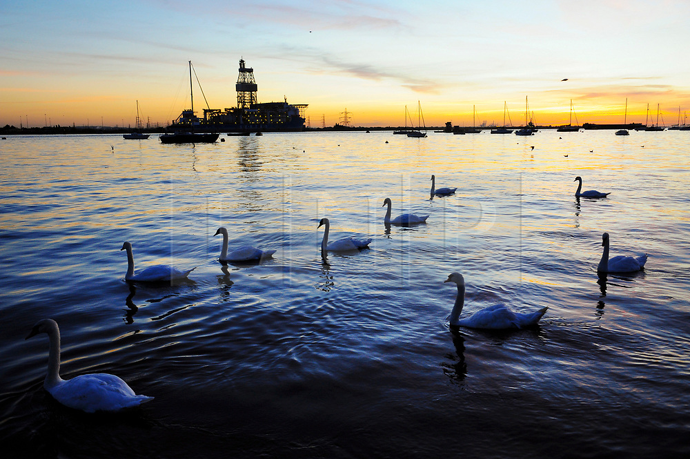 © Licensed to London News Pictures. 02/08/2018<br /> Gravesend, UK. Swans on the River Thames at sunrise at Gravesend in Kent, as the UK is expected to experience another heatwave. Photo credit: Grant Falvey/LNP